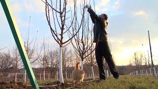 видео Яблочный бизнес: план яблоневого сада