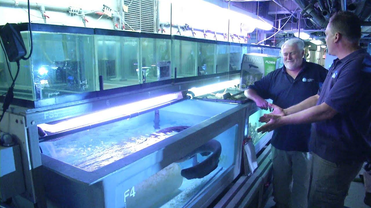 Electric Eel Tank