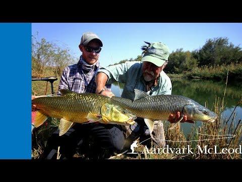 Fly fishing for Largemouth Yellowfish on the Orange River