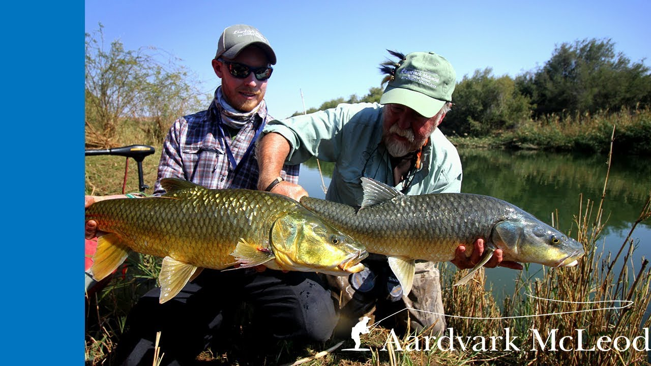 Fly fishing for Largemouth Yellowfish on the Orange River ...