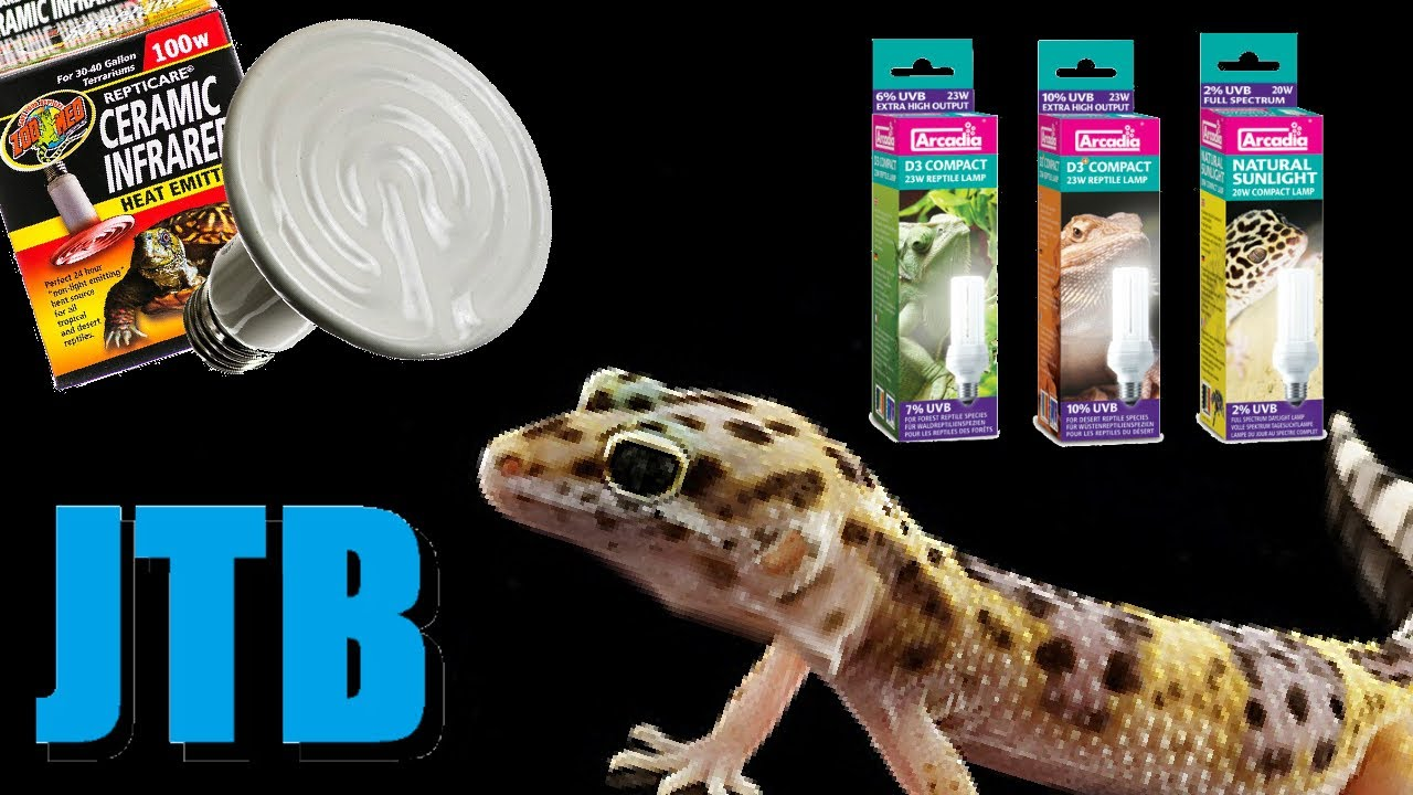 Leopard Gecko Heating And Lighting - YouTube
