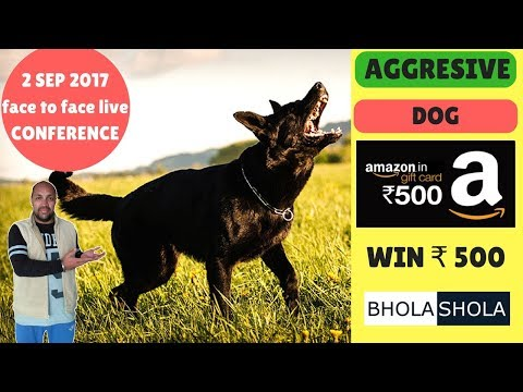 Pet Care - Why My Dog is Aggressive, Irritated, Attacking  - Bhola Shola - Harwinder Singh Grewal