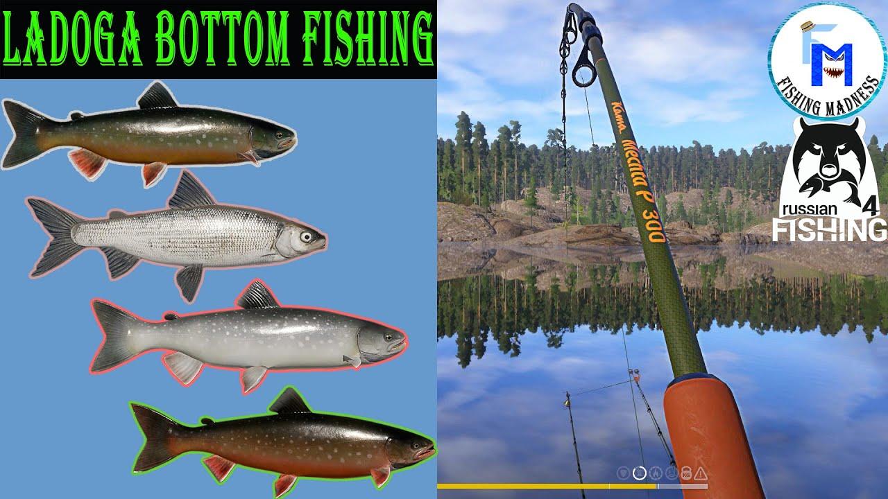 Grey Char, Red Char, Whitefish - Ladoga [Russian Fishing 4 ...