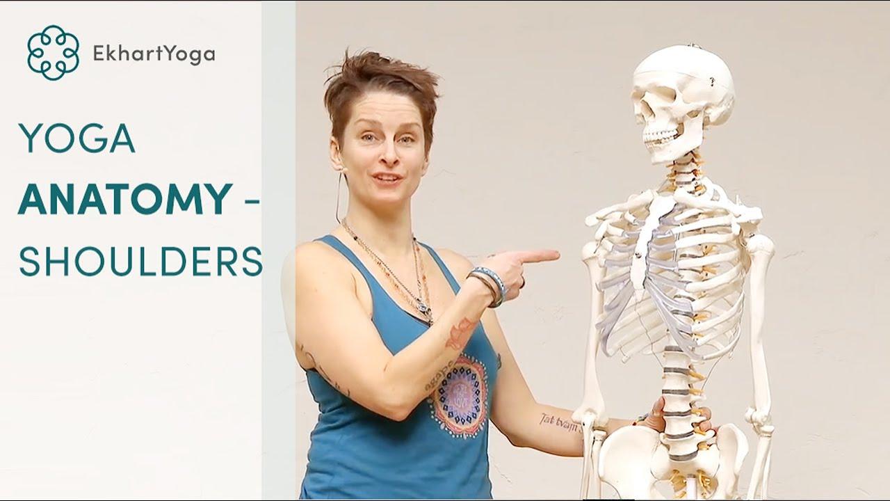 Yoga Anatomy - Anatomical insight on the shoulder - YouTube