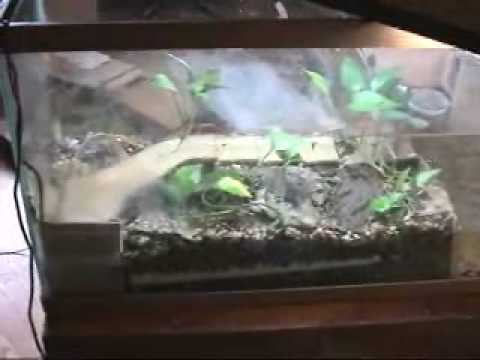 Making Aqua Terrarium Vivarium Plaudarium For Newts Frogs