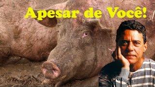 """""""Apesar de Você"""" - Uma Homenagem Abolicionista ao Resgate dos Porcos no Rodoanel"""