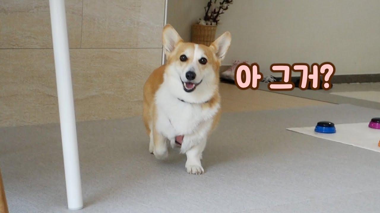 산책 나가는 김에 새로운 단어 배운 강아지