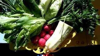 Салат летний витаминный с капустой, редиской, зеленым луком, тушеными кабачками