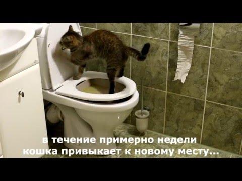 Как приучить кошку какать в лоток
