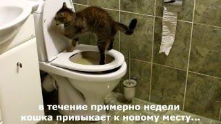 Как научить кошку ходить туалетиться на унитаз. Пошаговая инструкция как приучать.