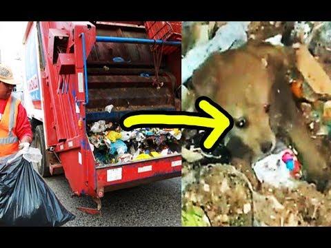 ¡EMOCIONANTE! No creerás lo que estos recolectores, lograron salvar de la trituradora de basura.