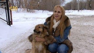 Челябинский полицейский привёл собаку к любви