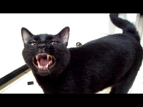Talking Kitty Cat 28 - Pussy Cat Whipped