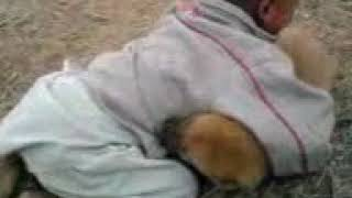 Dog and boy funny hd video 16/7/2018