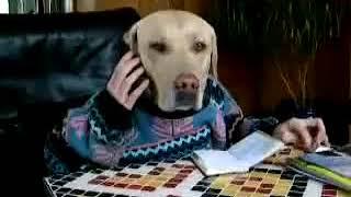 Pies rozmawia przez telefon