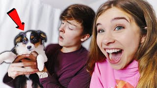 I Surprised My Boyfŗiend wİth a PUPPY! (Cute Reaction)