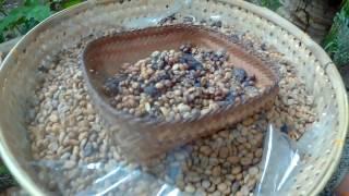 Кофе Лювак (Luwak): как его готовят в Индонезии