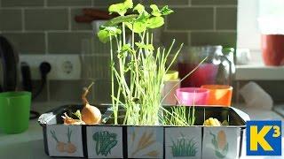 Експерименти: Пророщуємо насіння