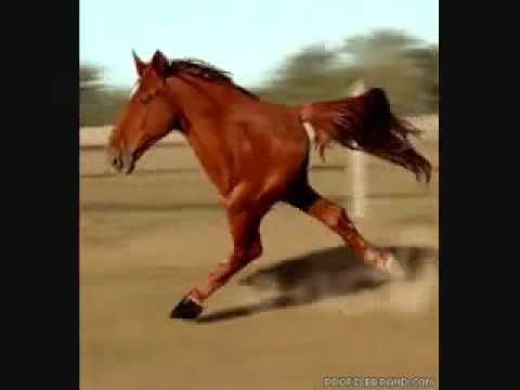 Retarded Running Horse - YouTube - photo#16