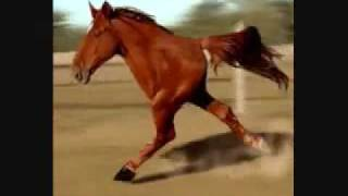 Retarded Running Horse