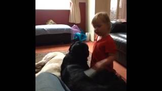 Rottweiler Grooming Time.