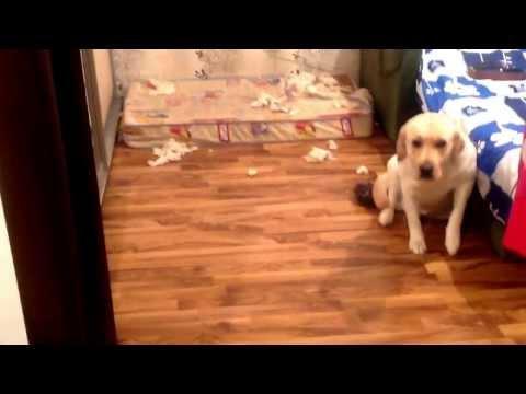 Собаки - YouTube