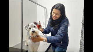 Cómo peluquear a mi animalito / Una  bonita Schnauzer / Animales Felices