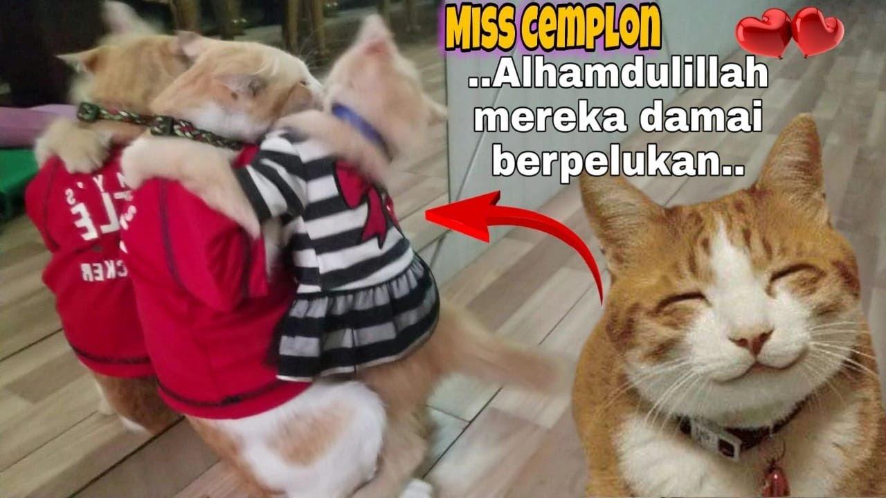 Drama Kucing Lucu Berpelukan ♥️ Jangan Berantem Lagi ya Cing.... 😹 Miss Cemplon