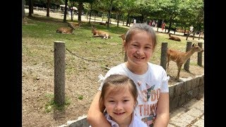 Japan Visit To Nara Deer Park Temple 東方姊妹日本行-奈良野鹿公園