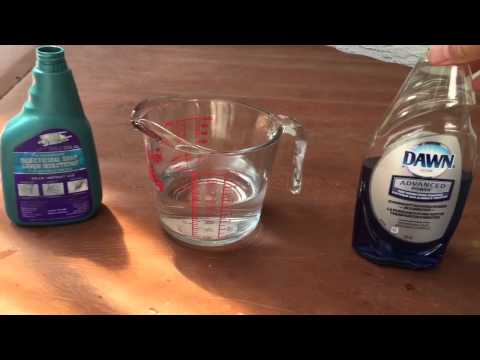 CRAZY APHID ISSUES: DIY APHID AND BUG SPRAY FOR ORCHIDS AND OTHER PLANTS