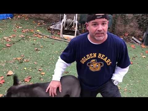 Dog & Joe Sho - #FURSDAY - TITAN