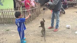 Topeng Monyet - Funny Monkey - Baby Ali icel Kasih Jajan Monyet