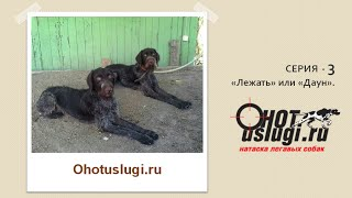 Обучение и натаска легавой собаки. Серия 3 (Лежать или Даун)