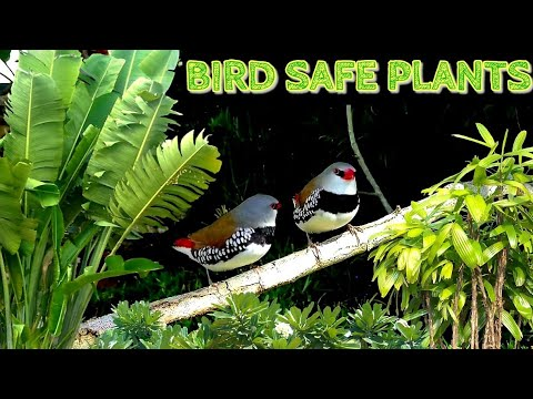 Bird-Safe Plants For The Aviary