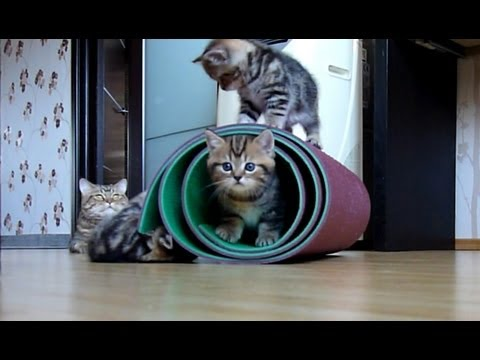 Cutest and funny Kittens playing with mat ( cat ninja tricks )