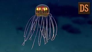 В Тихом океане найдена «медуза НЛО» ЖЯ