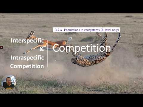 Competition - Intraspecific & Interspecific