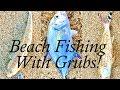 Beach Fishing With Grubs!
