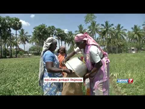 Salem farmers switch to Ragi cultivation owing to demand