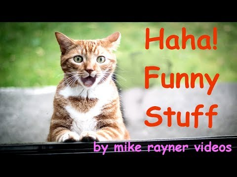 Amazing Funny Animals! make you Laugh Cats & Dogs! Happy Fun Stuff!