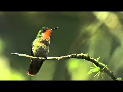 Trinidad And Tobago's Beautiful Birds
