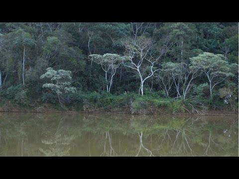 Curso Restauração Florestal em Áreas de Reserva Permanente e Reserva Legal