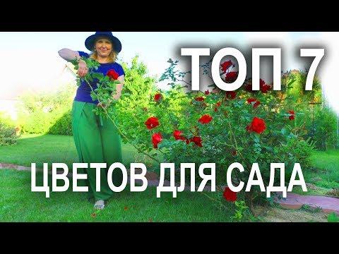 Самые популярные многолетние цветы для сада. - Видео онлайн
