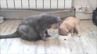 Прикольные кошки 8. Cat Conflict. Greedy mother.