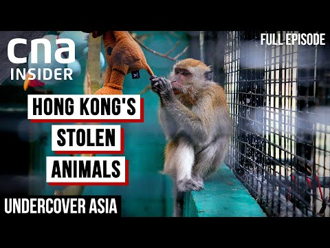 Hong Kong's Deadly Underground Animal Trade | Undercover Asia | CNA Documentary