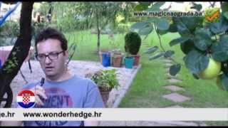 Magična ograda Nesad Hotic Tuzla