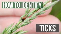 How to Identify Ticks - Tick Identification