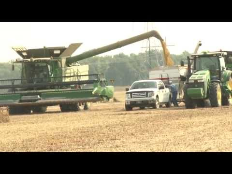 Record Yields, Soybean Harvest 2013