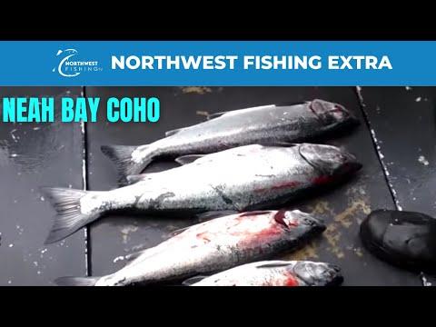 Late August Coho Salmon Fishing in Neah Bay, WA with Sekiu Charters