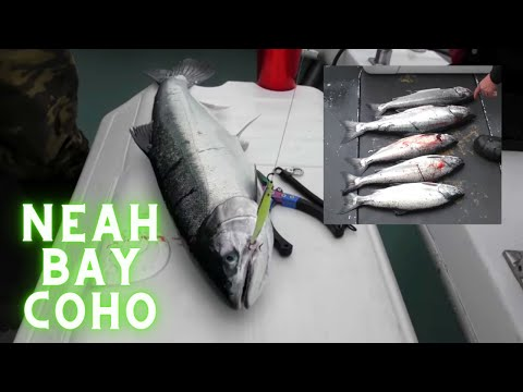 Saltwater Fishing For Salmon (Coho) In Neah Bay Washington